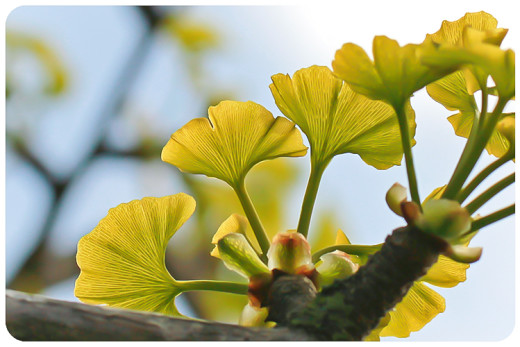 herbs and flowers naturkosmetik