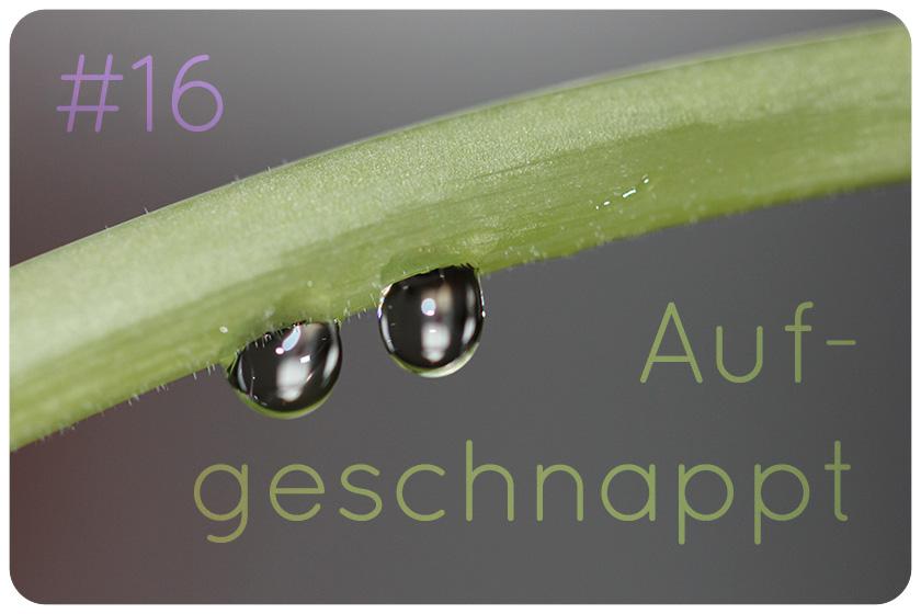 naturkosmetik blog herbs and flowers news aufgeschnappt