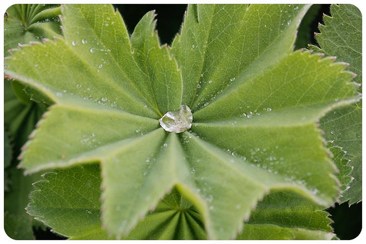 pantone greenery4
