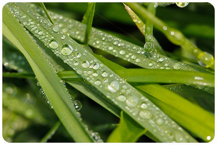 pantone greenery8