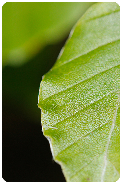 pantone greenery9