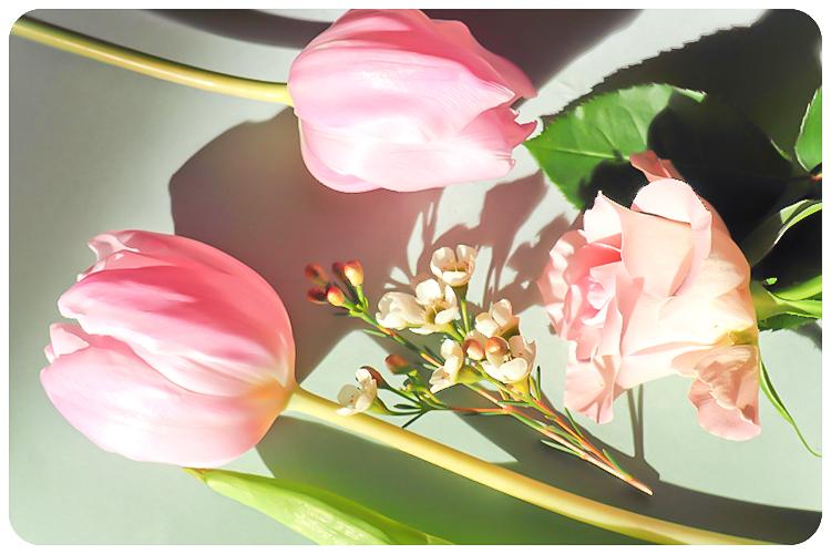 frühling tulpen-2