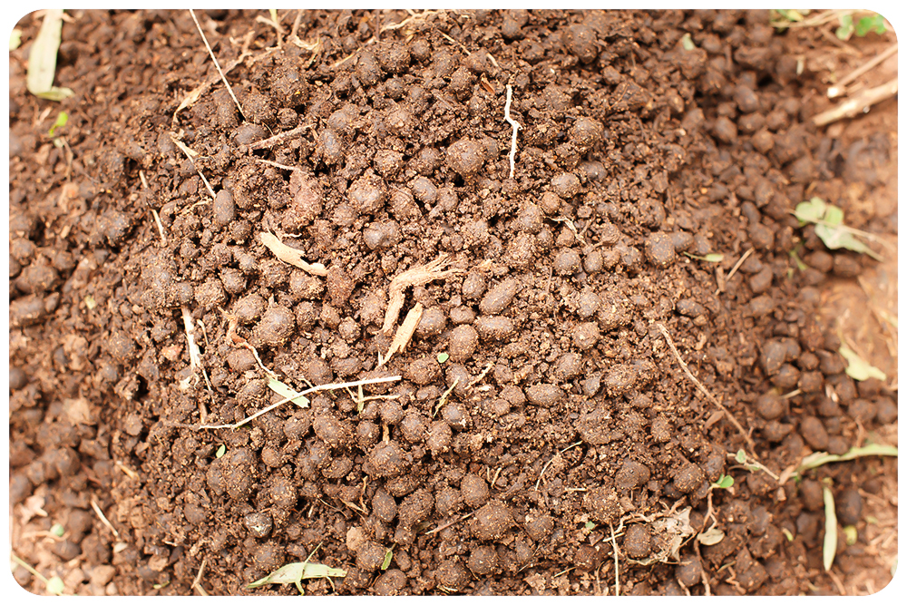 Der Boden spielt in der regenerativen Landwirtschaft eine wesentliche Rolle. Foto: Dr. Bronner's